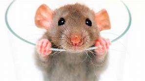 Een ratrace is oneindig. Het leven niet…